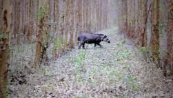 Tapir at day